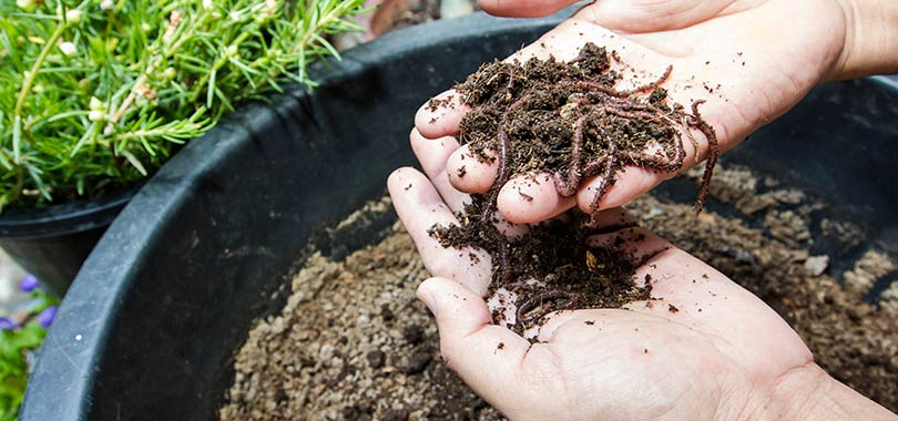 mcr compost consults article